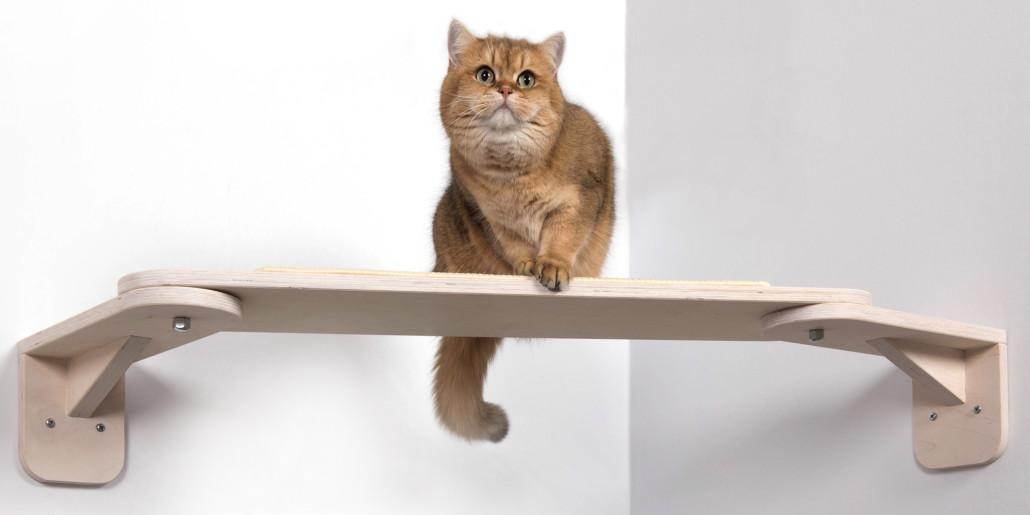 Catwalk Fur Katzen Ideale Erganzung Fur Ihren Kratzbaum