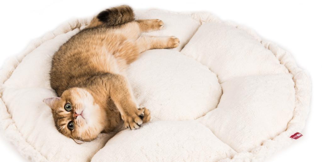 Profeline Katzenbetten
