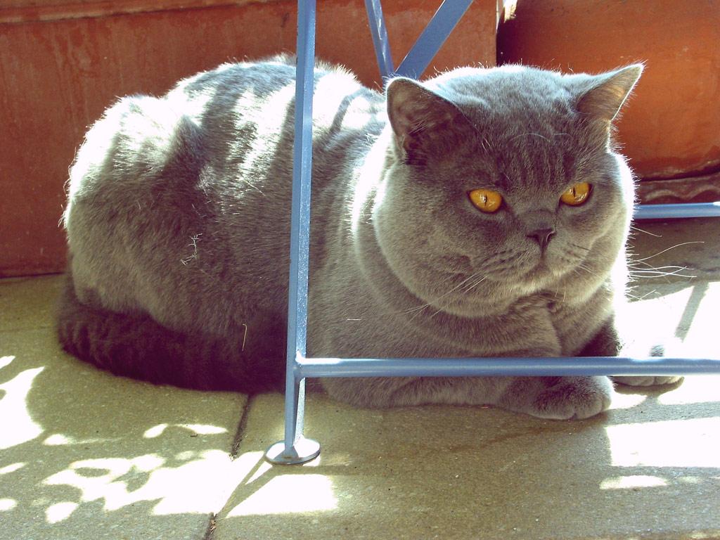 Die Fettesten Katzen Der Welt