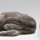 katzenbeschaeftigung_catnip