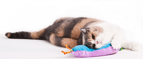 katzenbeschaeftigung_petstages