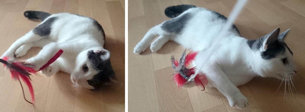 Beliebt Katzenspielzeug selber basteln - ein DIY Projekt von Profeline HF37