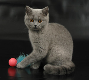 fur-pong-katzenspielzeug