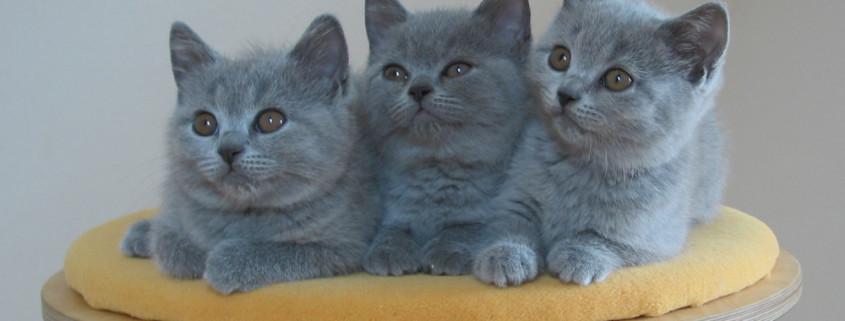impfungen-katzen