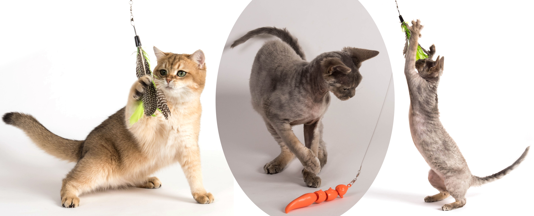 Jackson Galaxy And Kate Benjamin Cat Toys And Cat Books