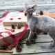 katzen-weihnachts-geschenke