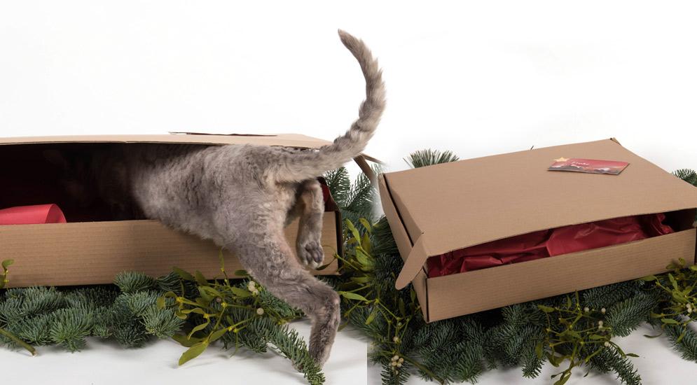 katzenspielzeug_weihnachten_ueberraschungsbox