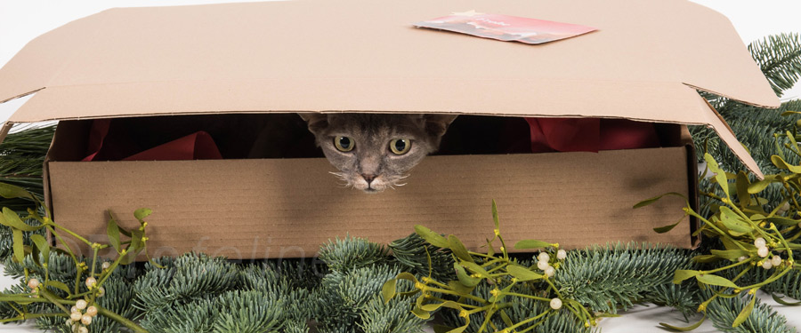 weihnachtsgeschenk f r katzen berraschungsbox x mas. Black Bedroom Furniture Sets. Home Design Ideas