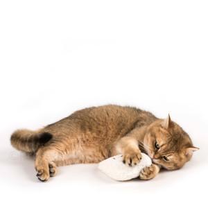 SP120-catnip-katzenspielzeug