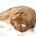 stinke-baumwollkissen-catnip-banner1