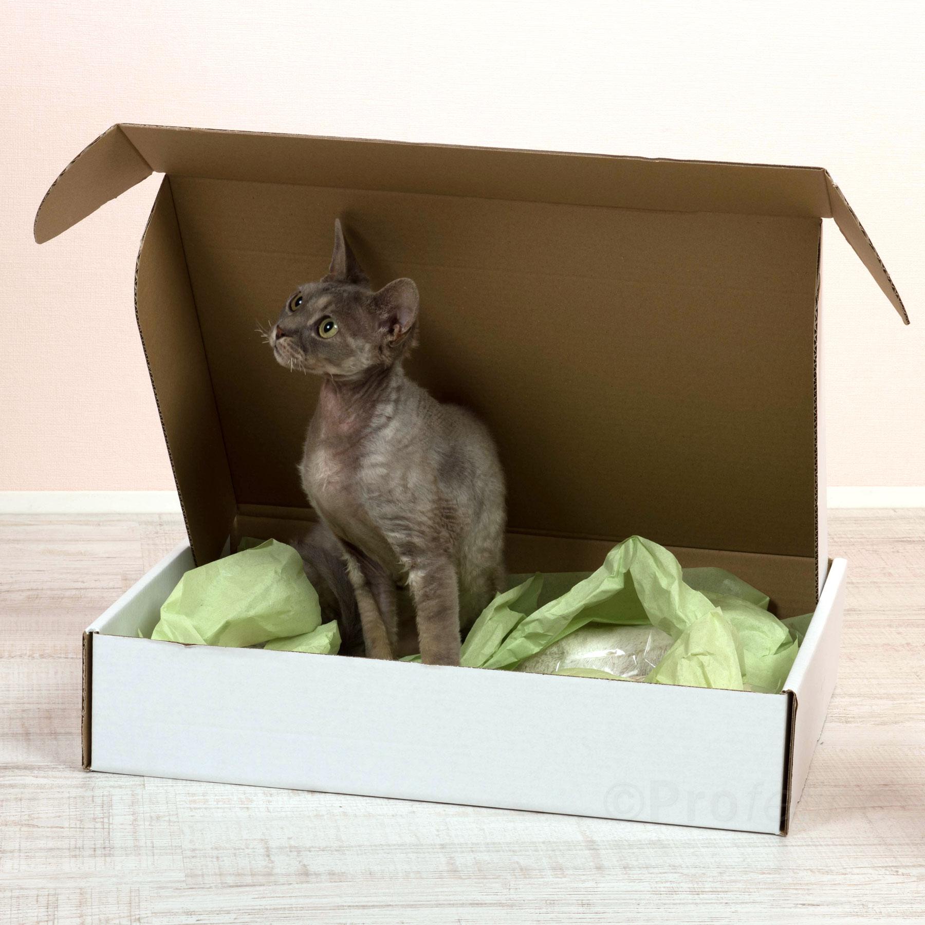 inspirierend baldrian spielzeug f r katzen selber machen. Black Bedroom Furniture Sets. Home Design Ideas