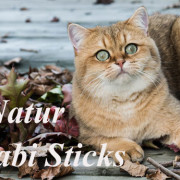 matatabi-sticks-natur-katzenspielzeug