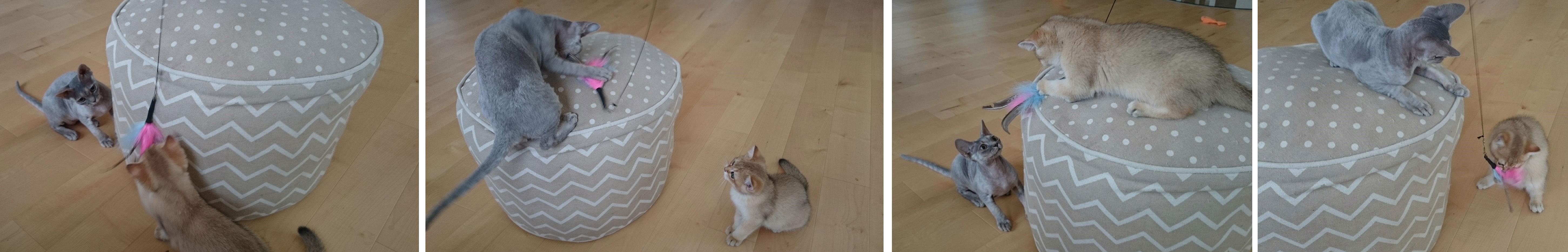 Katzenangel oder Katzenwedel - Katzenspielzeug