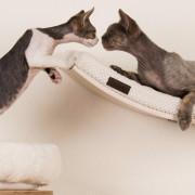 katzenliege-katzengerechte-wohnung