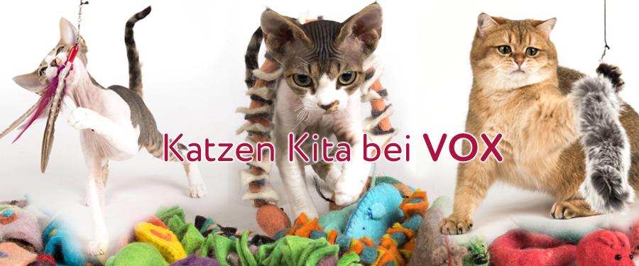Katzen Kita Vox Sendetermine